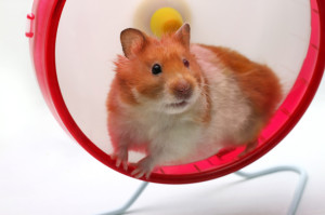 Where does a hamster go for Spring Break? Hamsterdam!